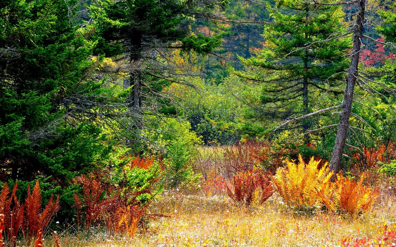 AWAYN IMAGE Cranberry Glades Botanical Area