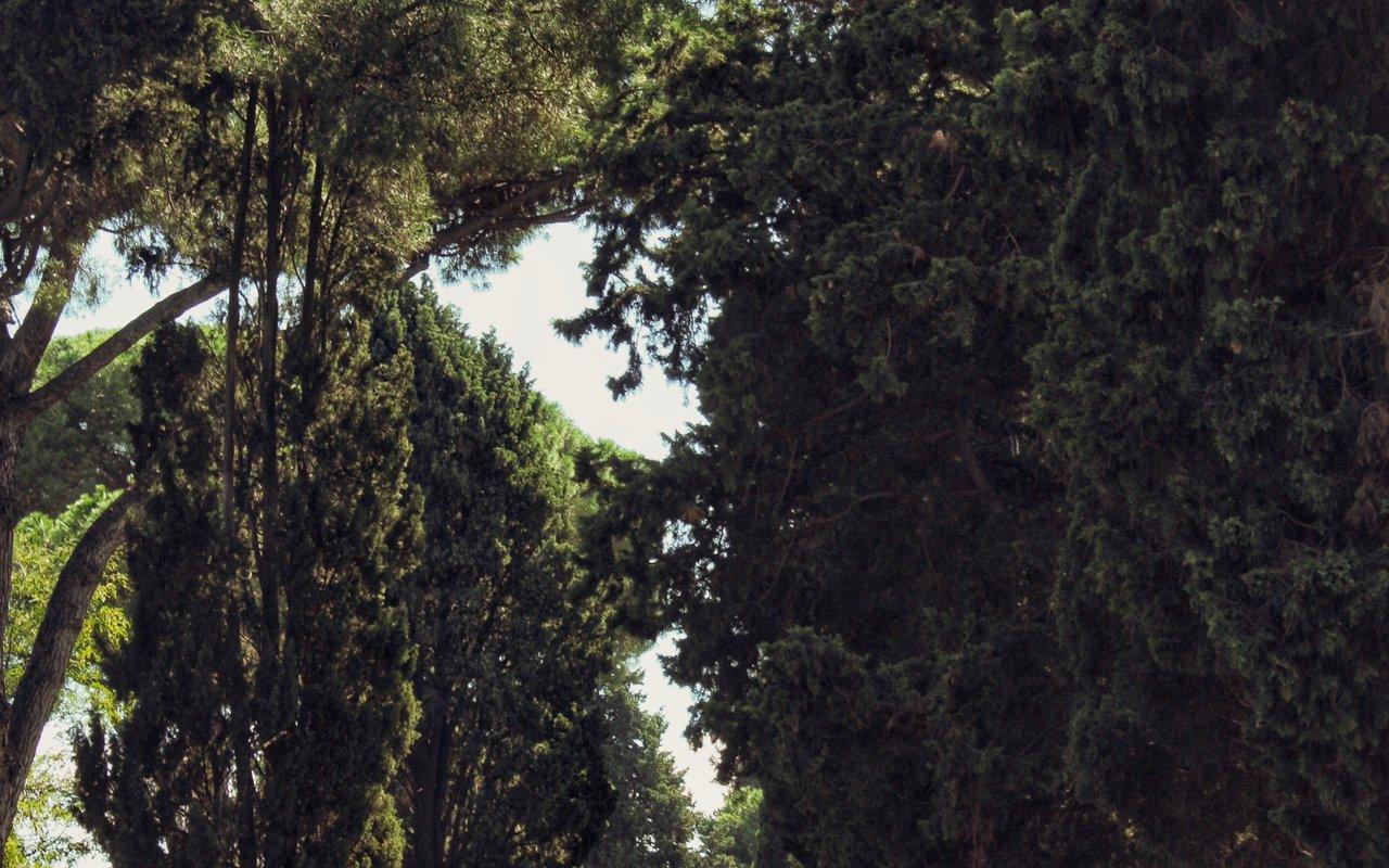 AWAYN IMAGE Wander around the Appian Way (Via Appia Antica)