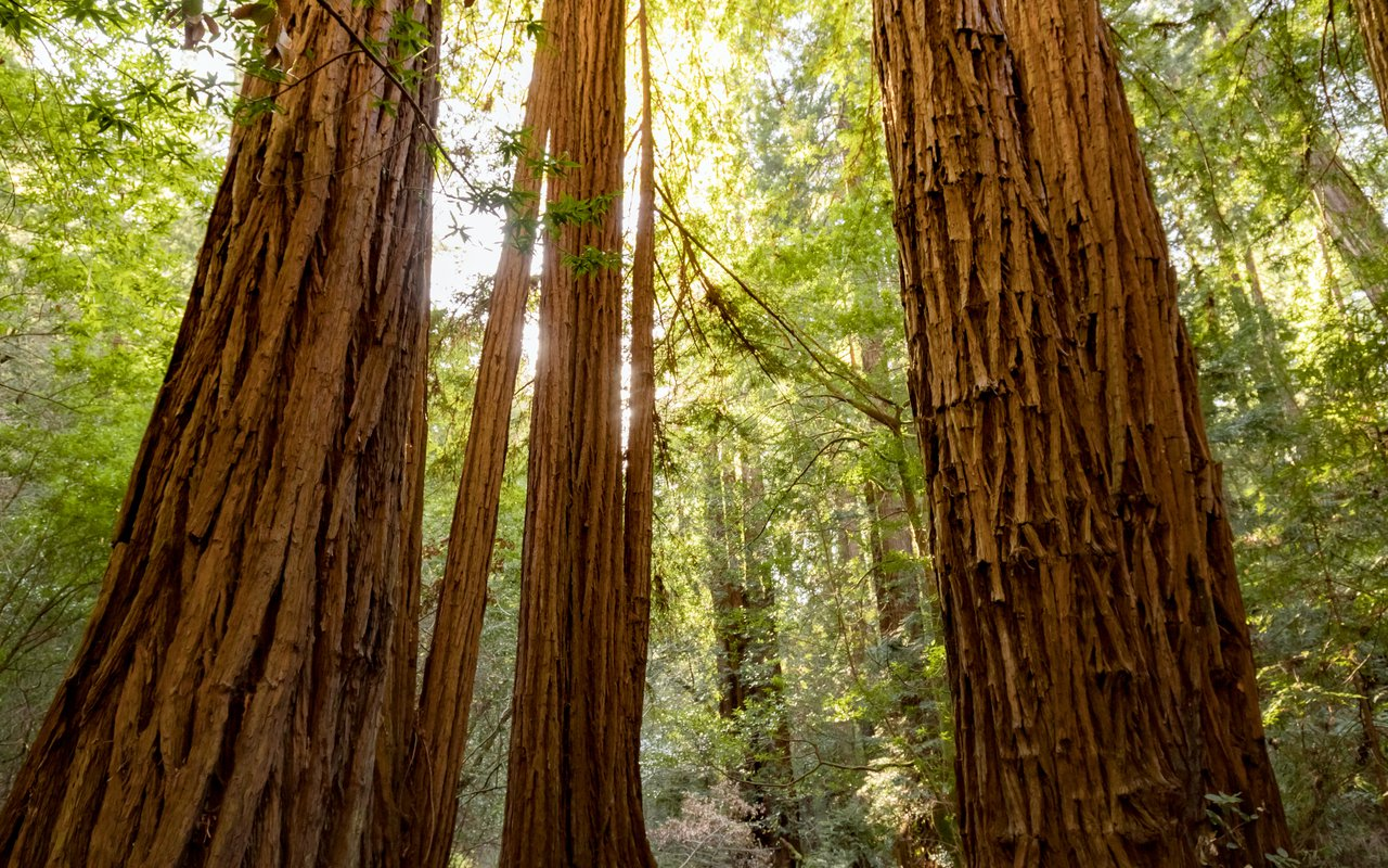 AWAYN IMAGE Muir Woods National Monument