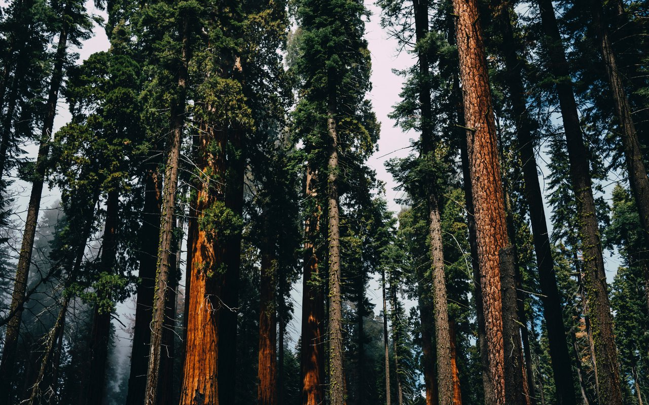 AWAYN IMAGE Sequoia National Forest
