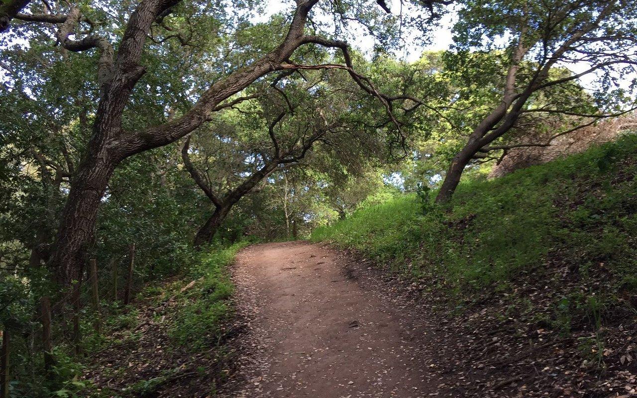 AWAYN IMAGE Hike in Mission Peak Loop