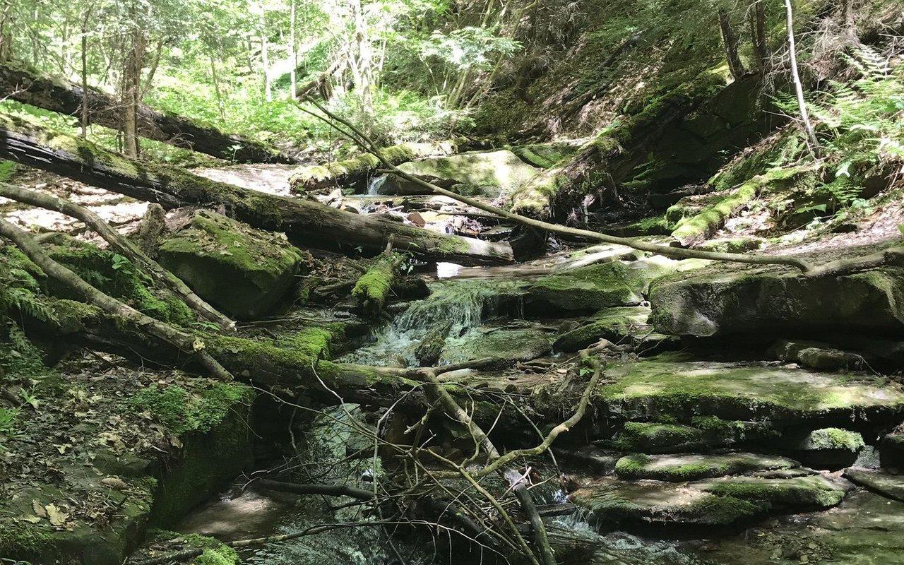 AWAYN IMAGE Hike the Slippery Rock Gorge Trail