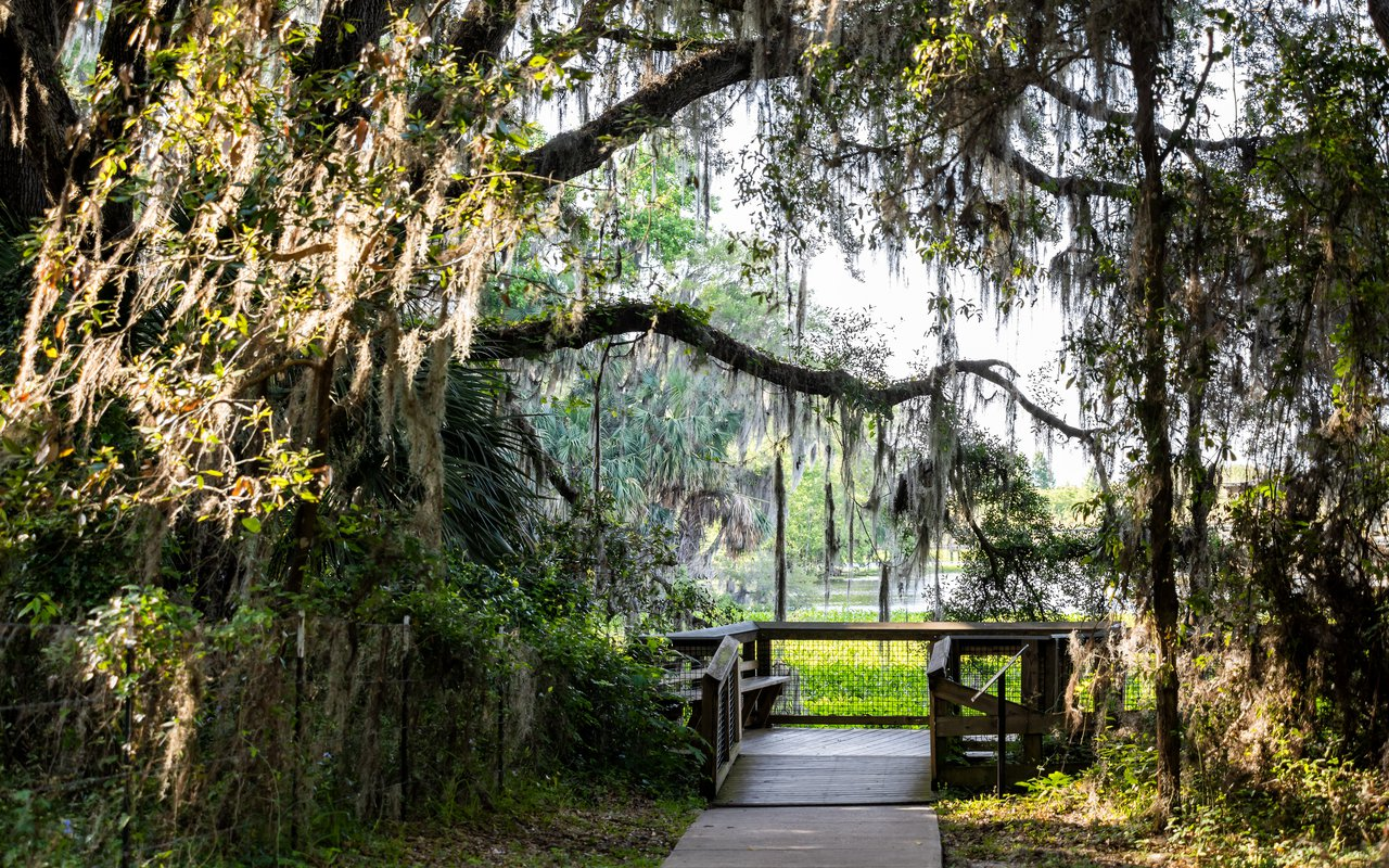 AWAYN IMAGE La Chua Trail near Micanopy, Florida
