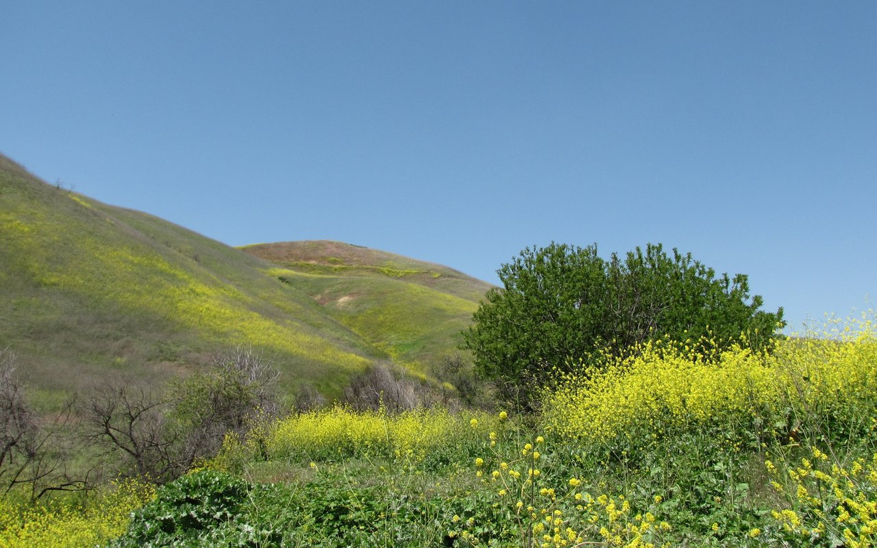 AWAYN IMAGE Chino Hills State Park