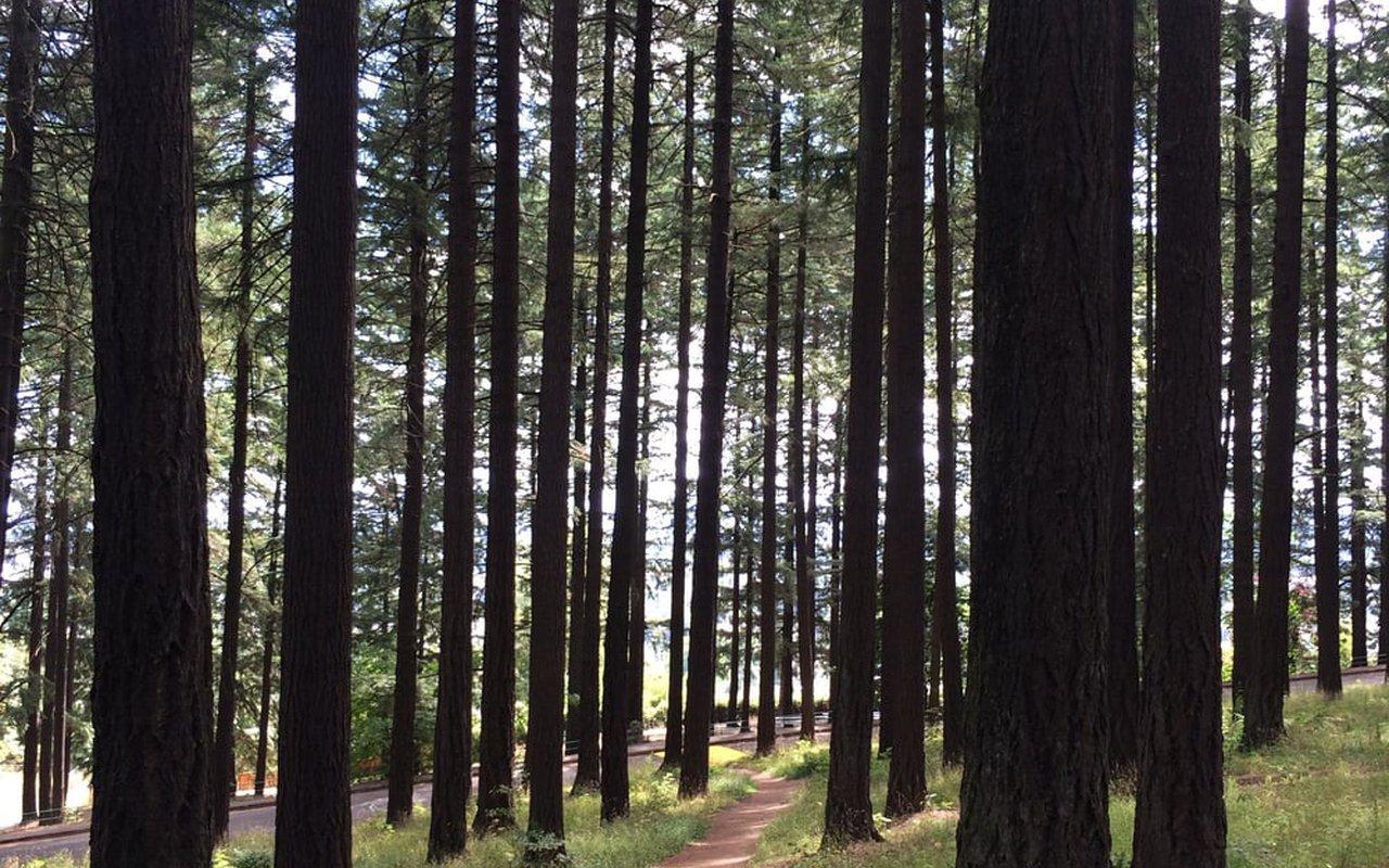 AWAYN IMAGE Mt Tabor Loop Trail