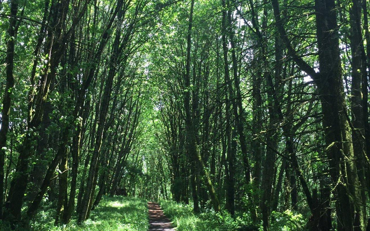 AWAYN IMAGE Wildwood Trail