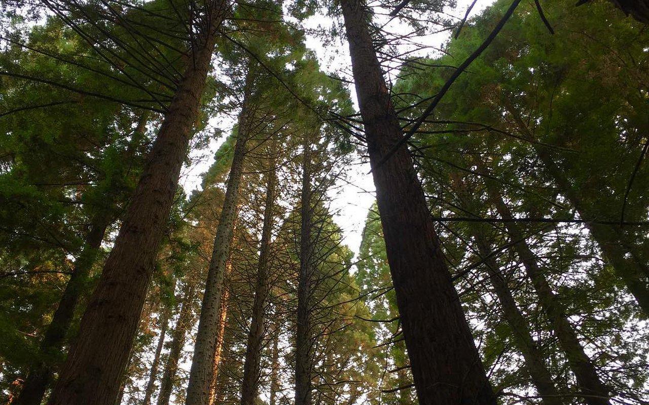 AWAYN IMAGE Hoyt Arboretum Trails