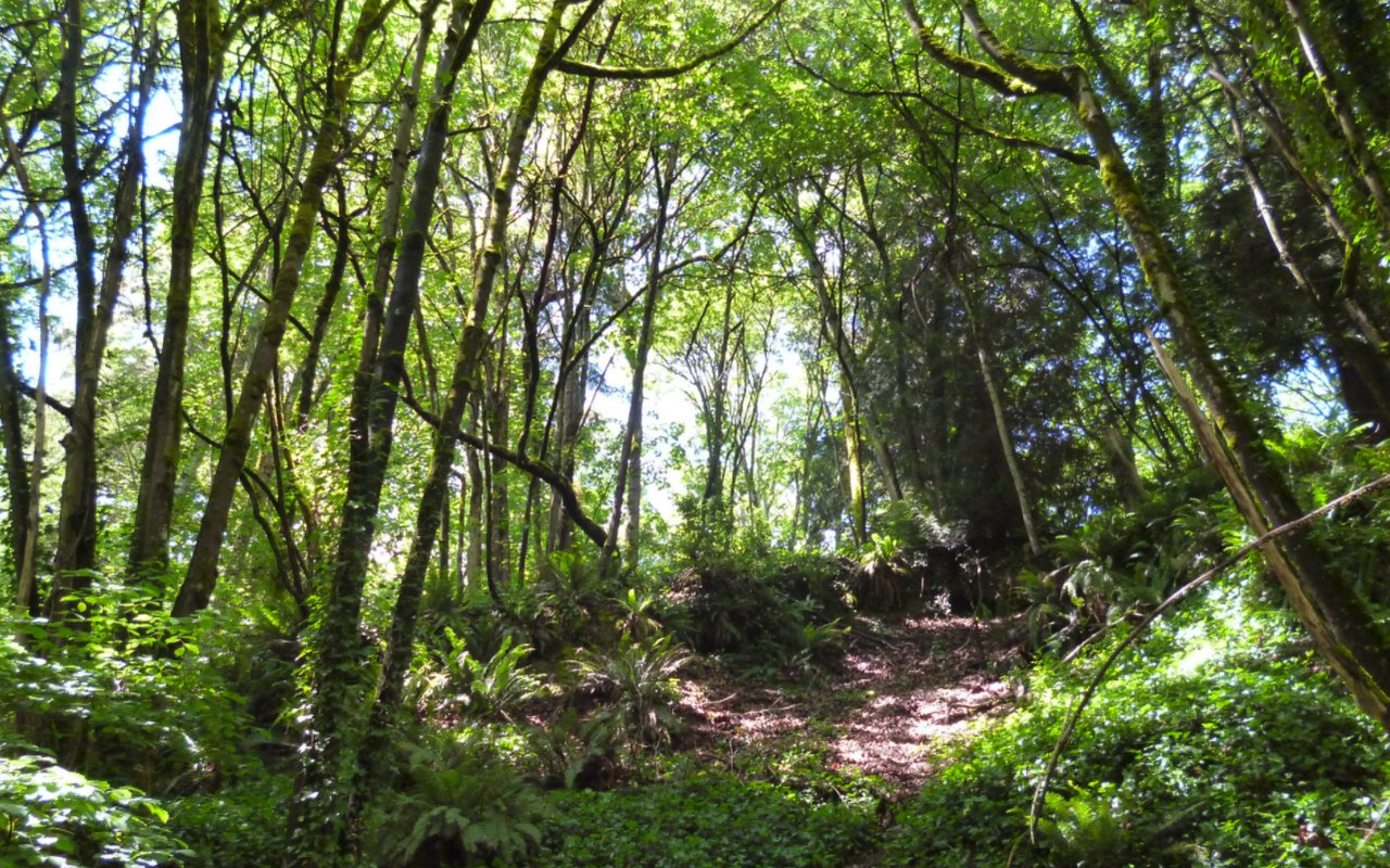 AWAYN IMAGE Interlaken Park Trail