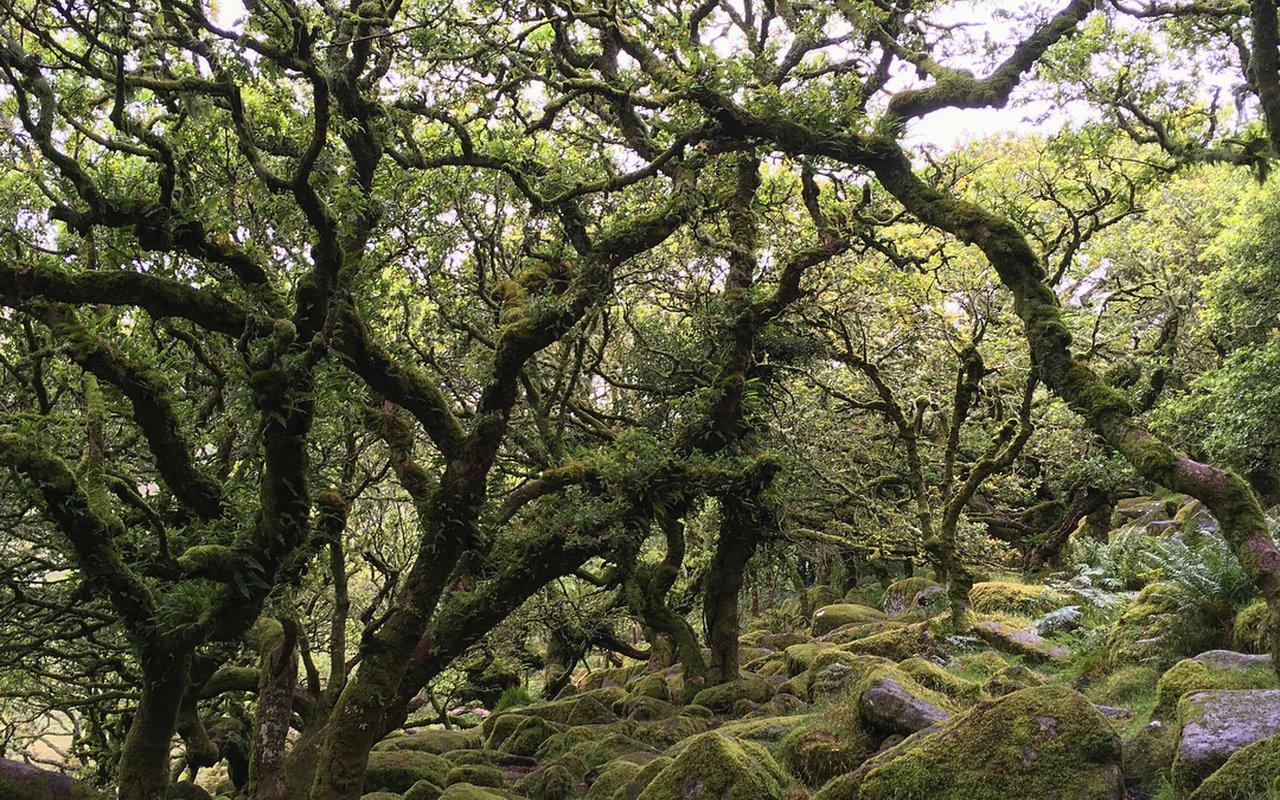 AWAYN IMAGE Photographt the Wistman's Wood