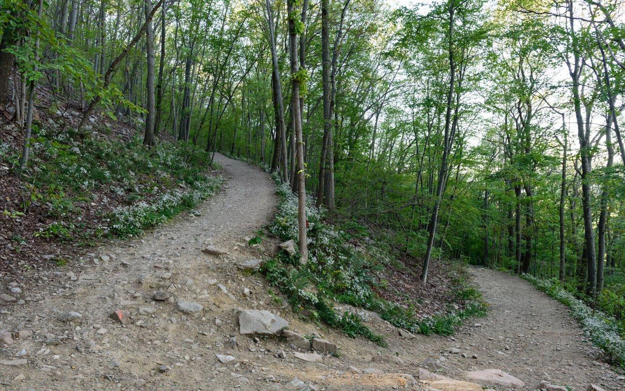 AWAYN IMAGE Mount Beacon Trail