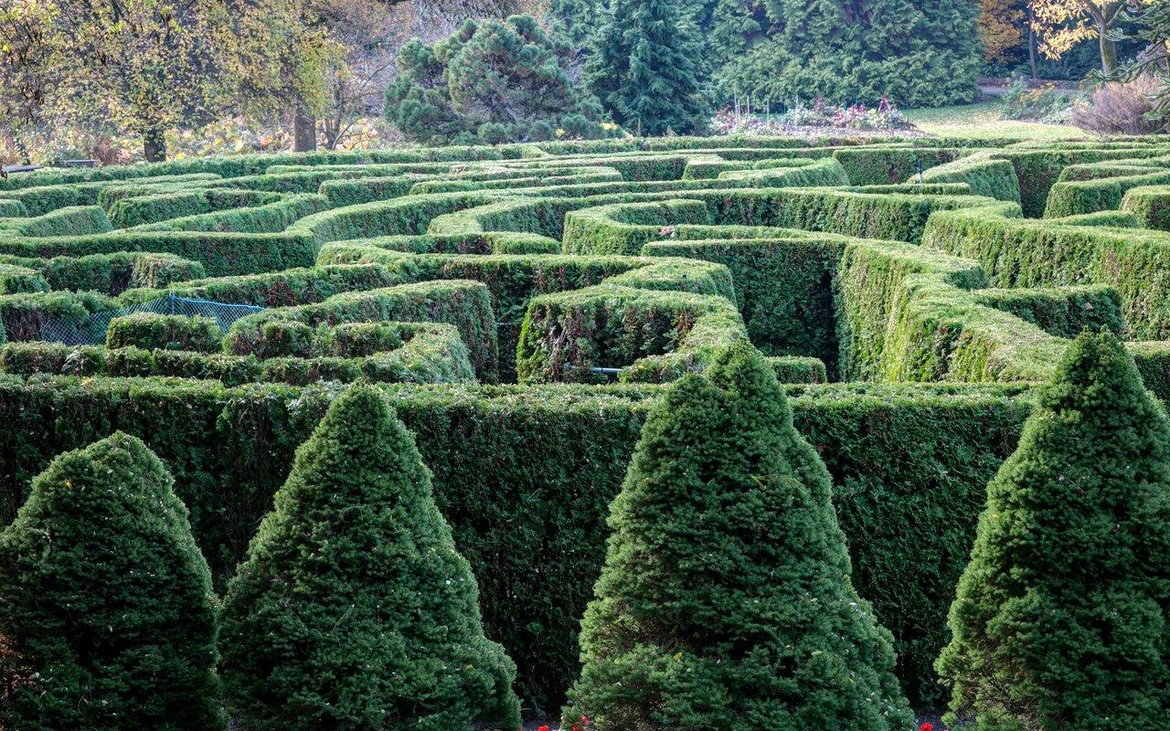 AWAYN IMAGE Explore VanDusen Garden's Elizabethan Hedge Maze