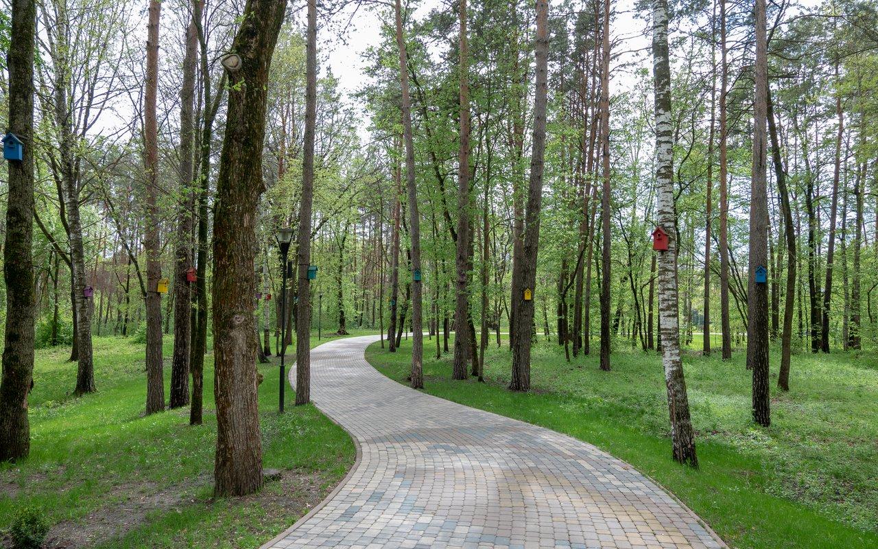 AWAYN IMAGE Hike to Sosnovka park Loop