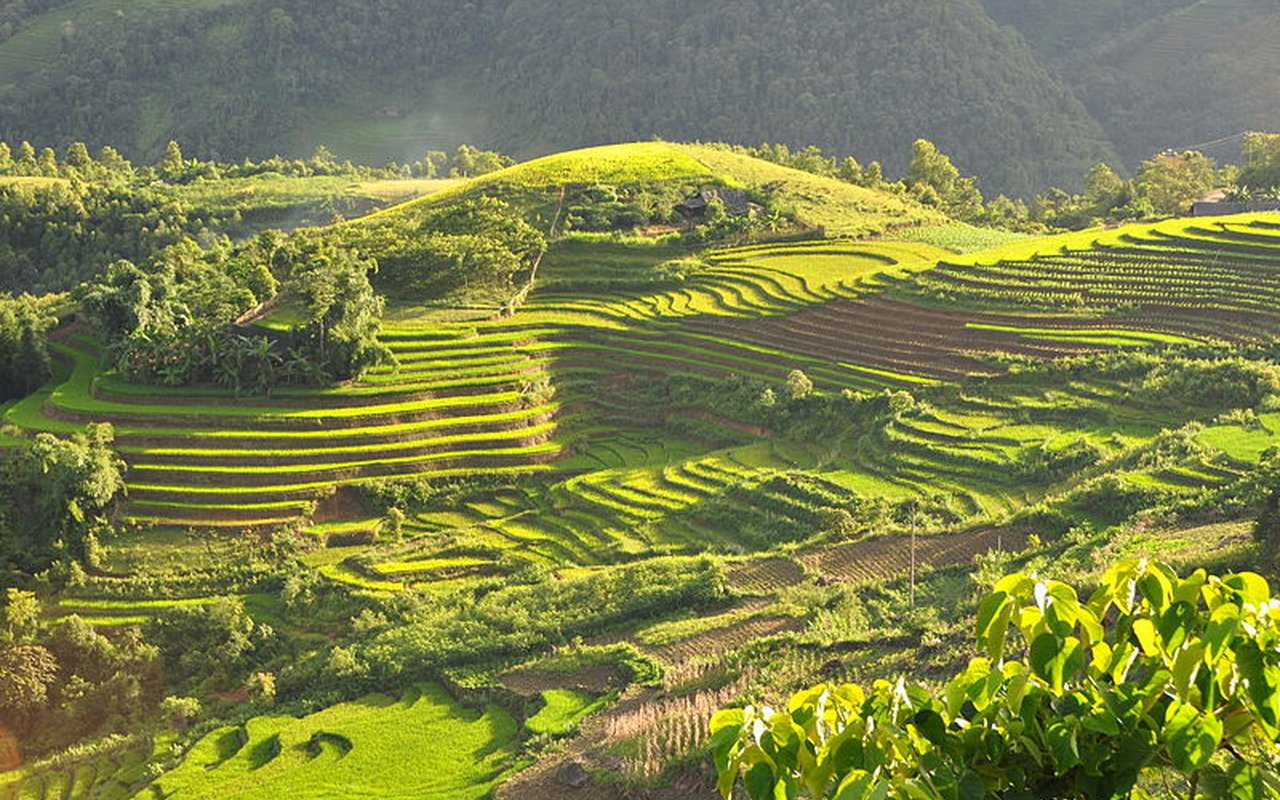 AWAYN IMAGE Jatiluwih Green Land Rice fields