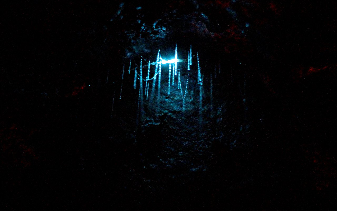 AWAYN IMAGE Walk around the Waitomo Glow Worm Caves