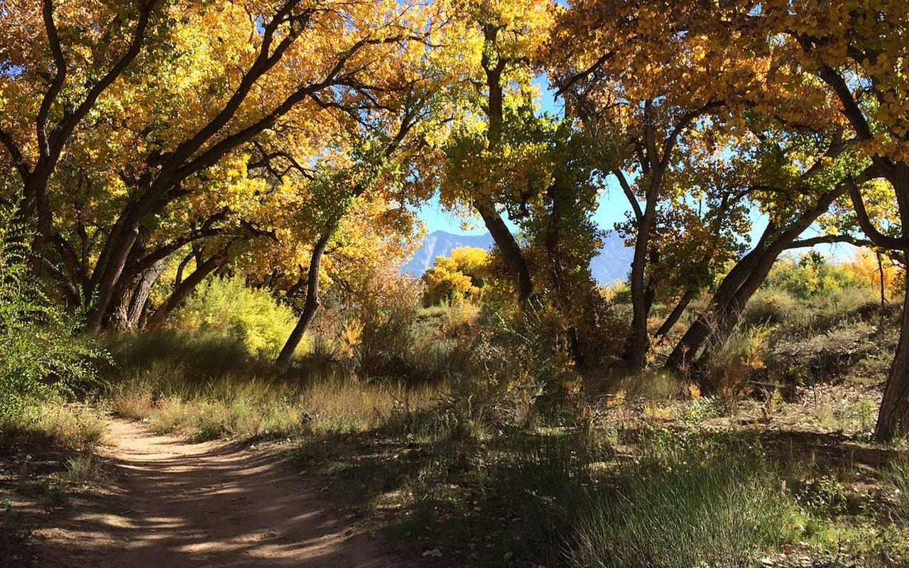 AWAYN IMAGE The Paseo del Bosque Bike Trail