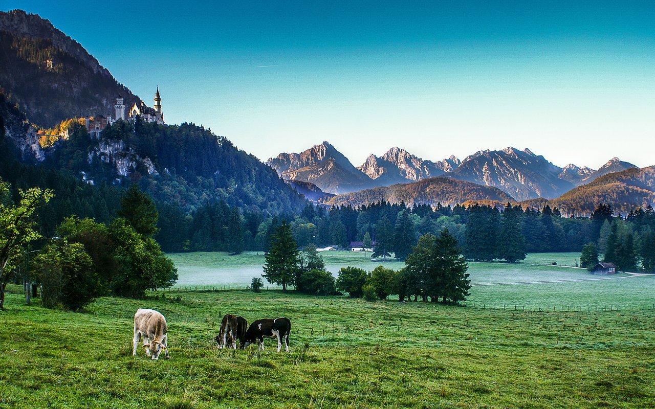 AWAYN IMAGE Visit Neuschwanstein Castle