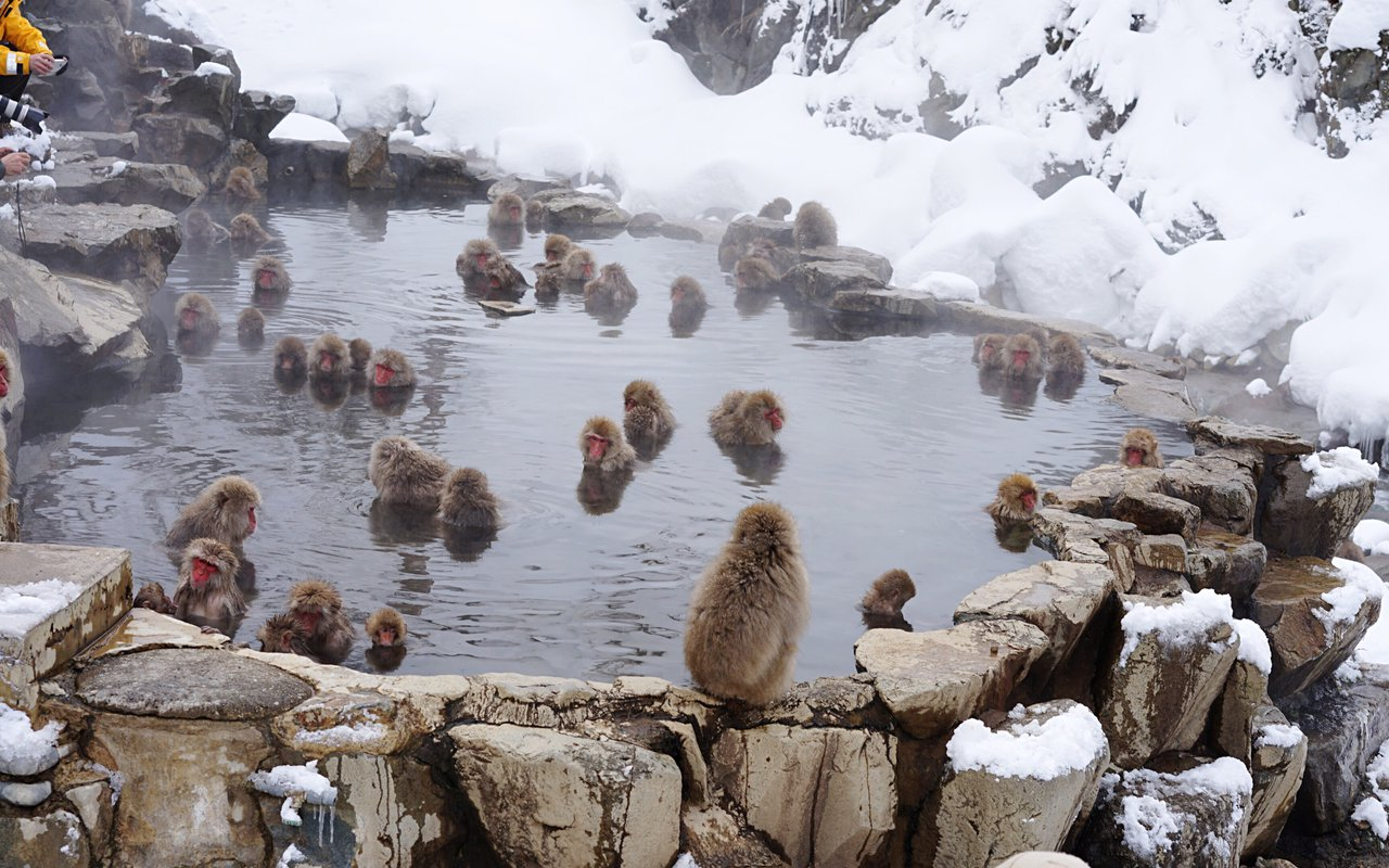 AWAYN IMAGE Hiking in the Jigokudani Snow Monkey Park