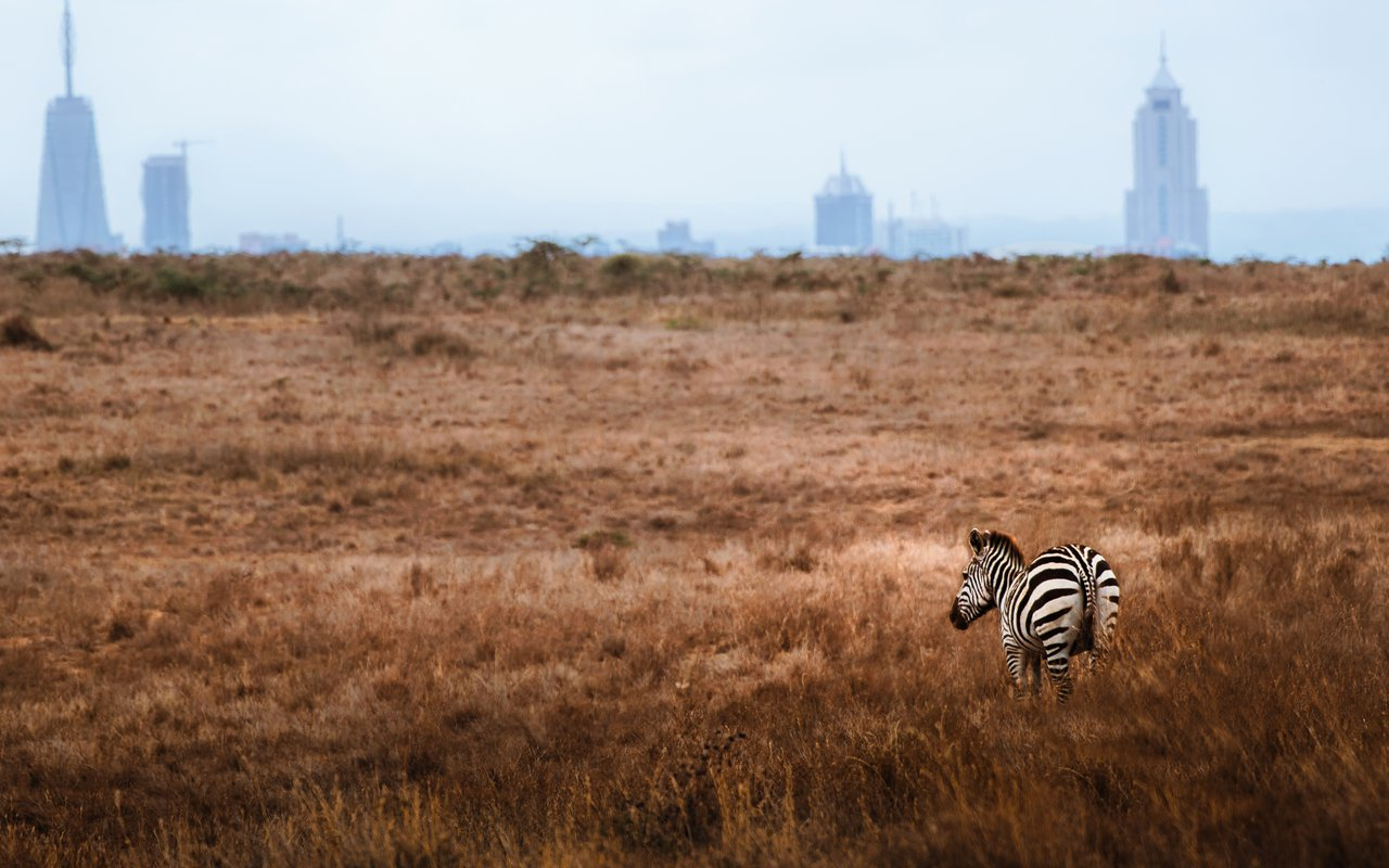 AWAYN IMAGE Nairobi National Park