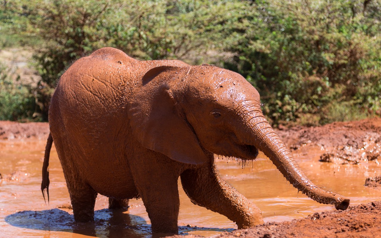 AWAYN IMAGE David Sheldrick Wildlife Trust
