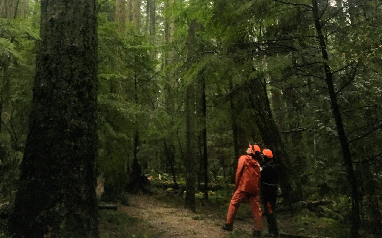 AWAYN IMAGE Explore Pacific Spirit Regional Park
