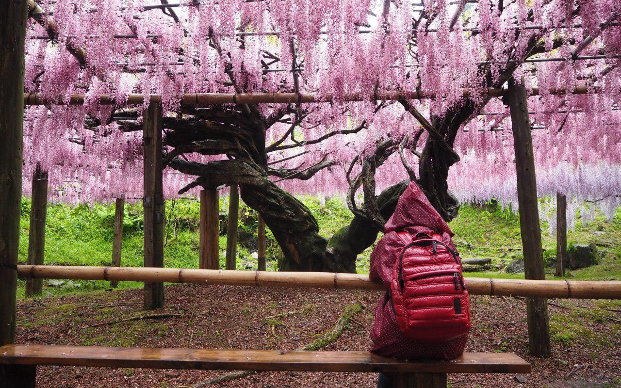 AWAYN IMAGE Explore Kawachi Fuji Gardens