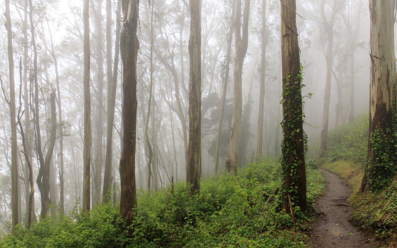 AWAYN IMAGE Hike to Mt. Sutro