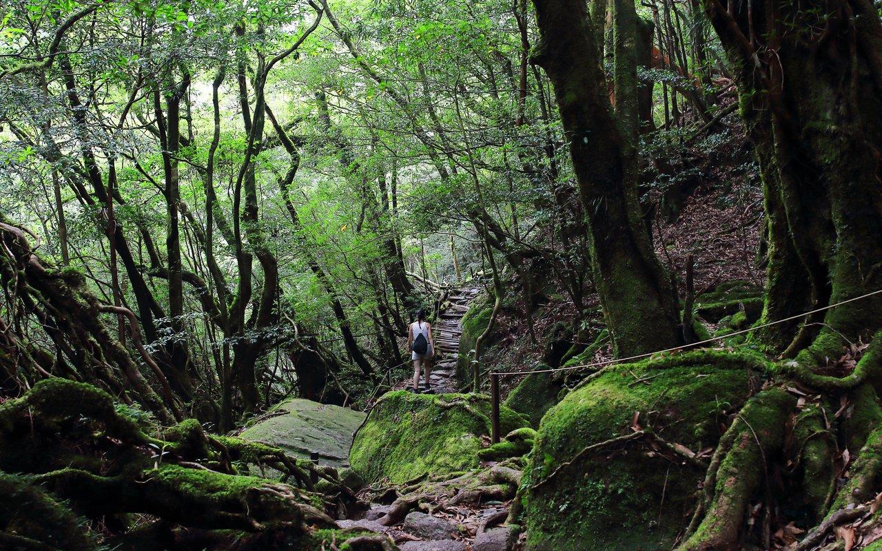 AWAYN IMAGE Walking journey through Yakushima Island