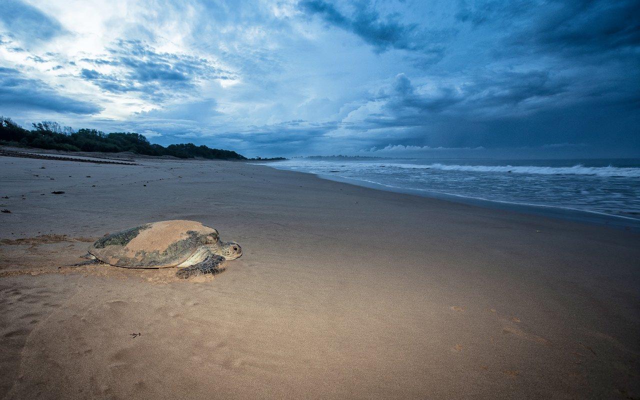 AWAYN IMAGE Sawarna Beach
