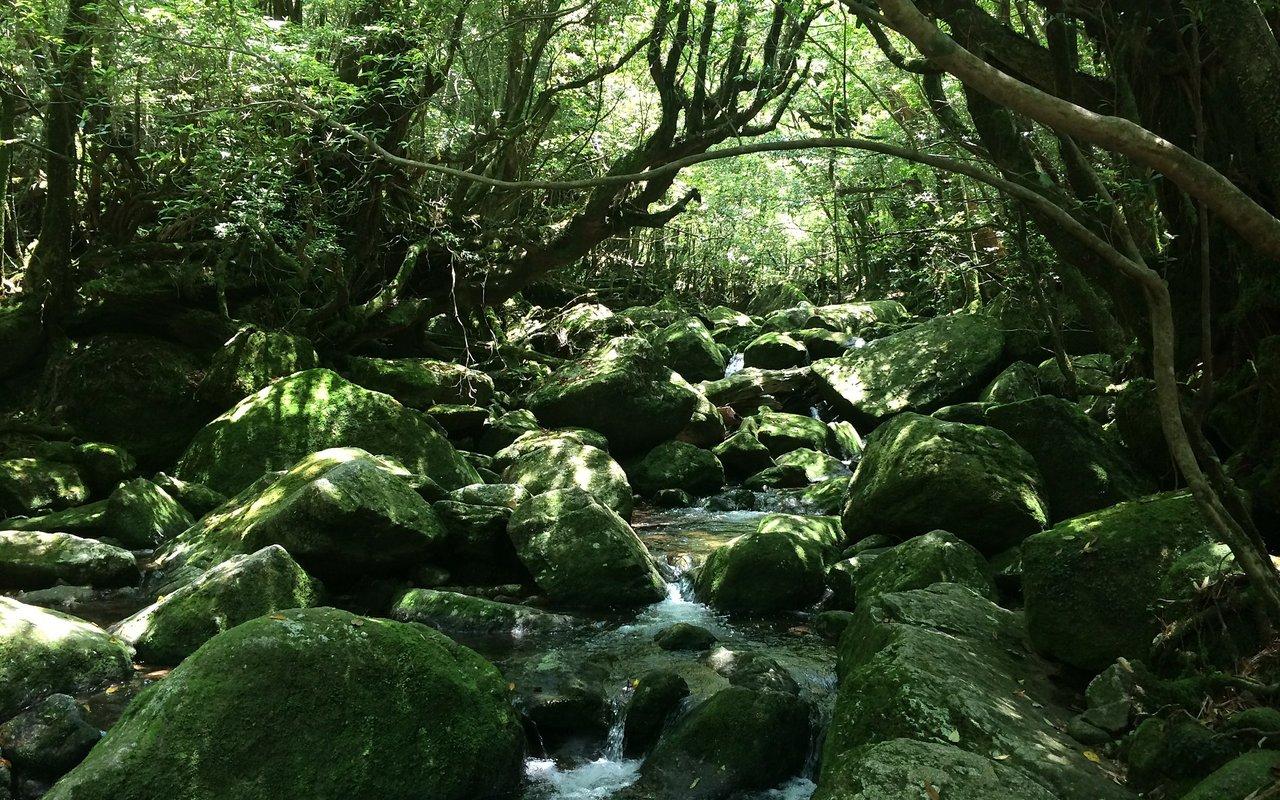 AWAYN IMAGE Yakushima Island