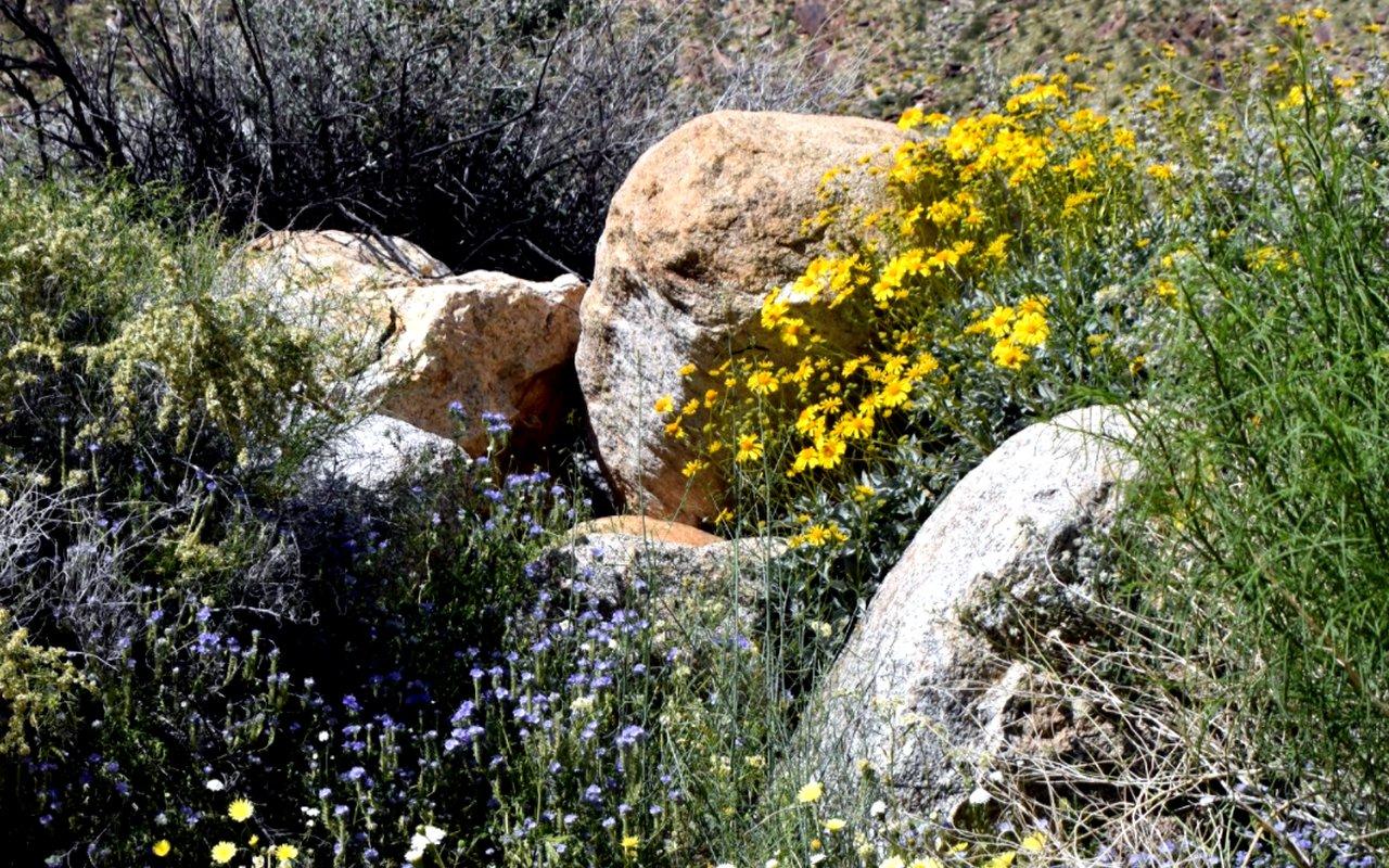 AWAYN IMAGE Anza-Borrego Desert State Park