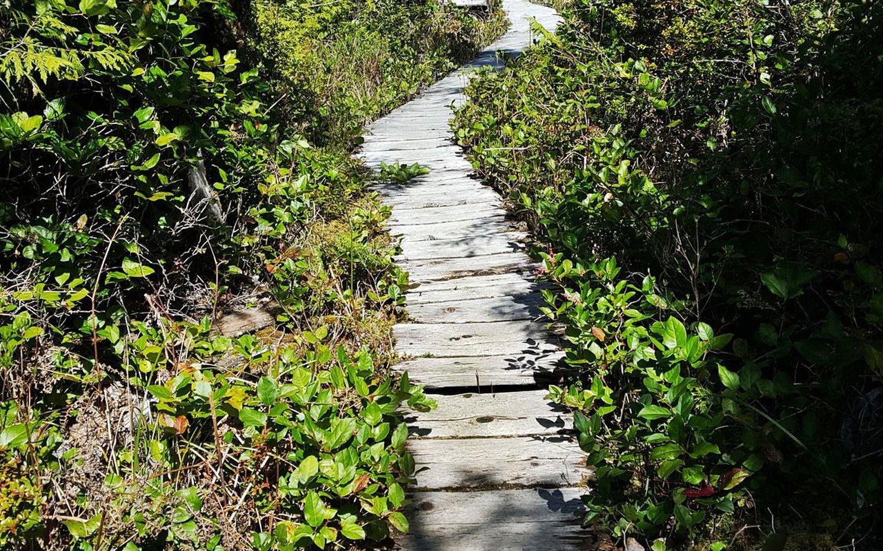 AWAYN IMAGE Ozette Triangle Trail