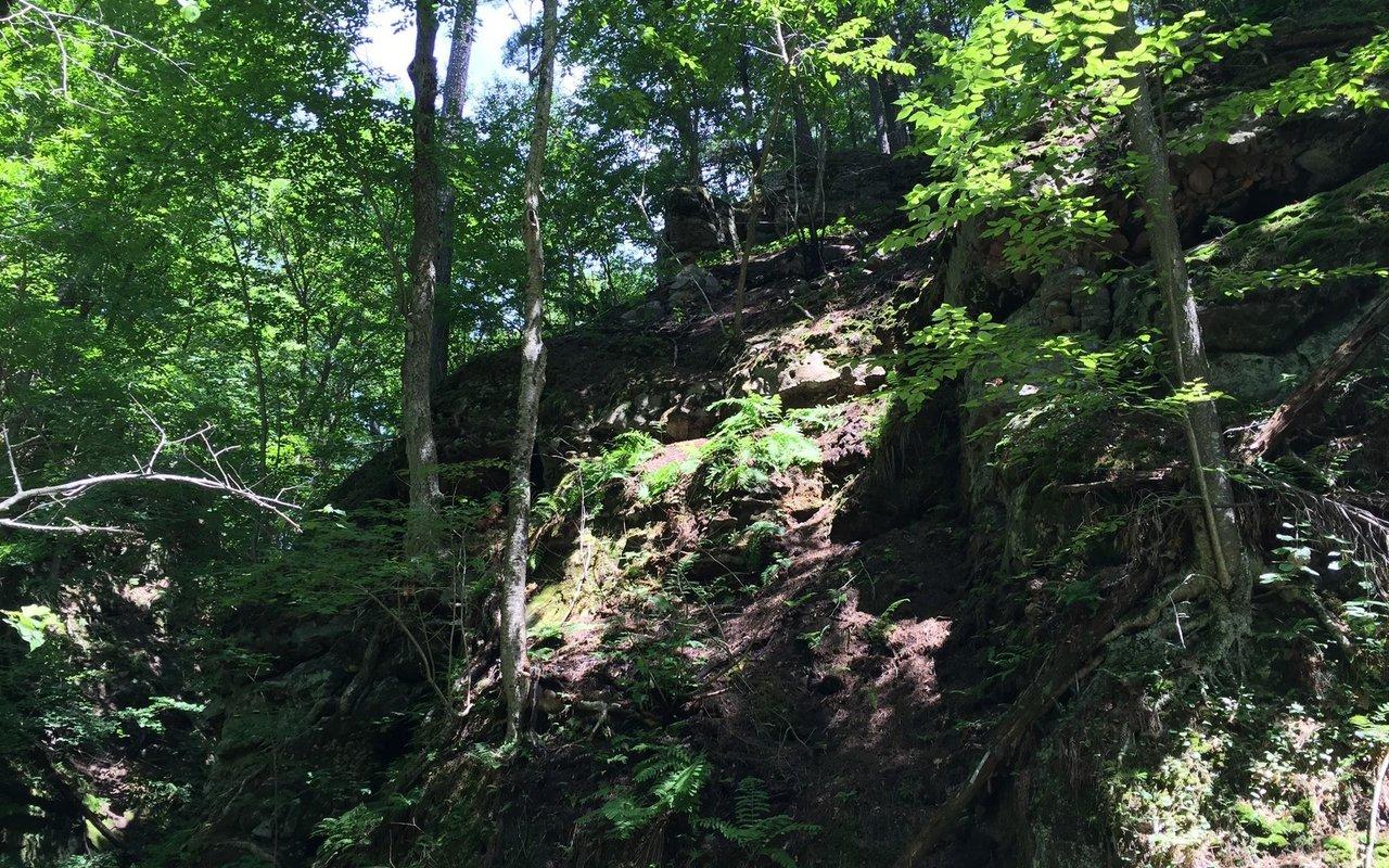 AWAYN IMAGE Brady's Bluff and Deer Me Run Trail Loop