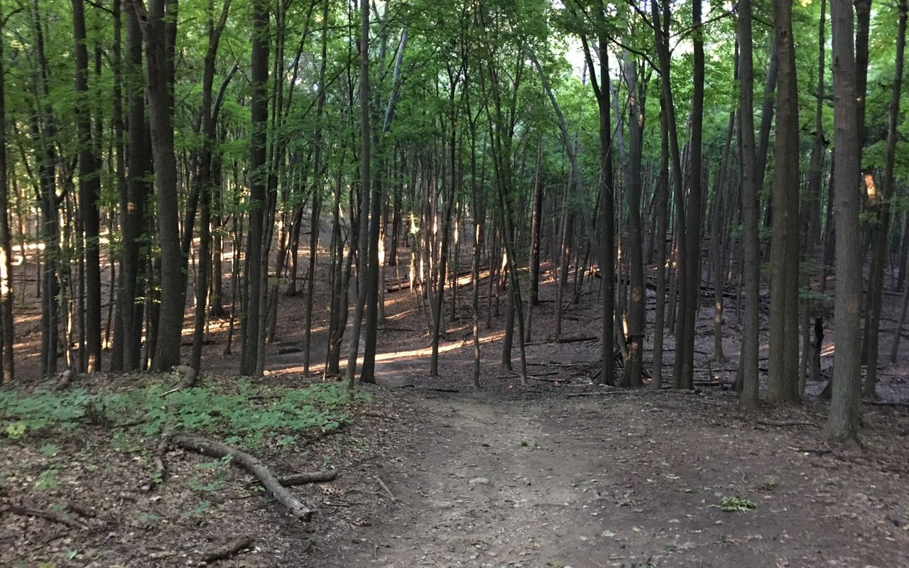 AWAYN IMAGE Bird Hills Trail