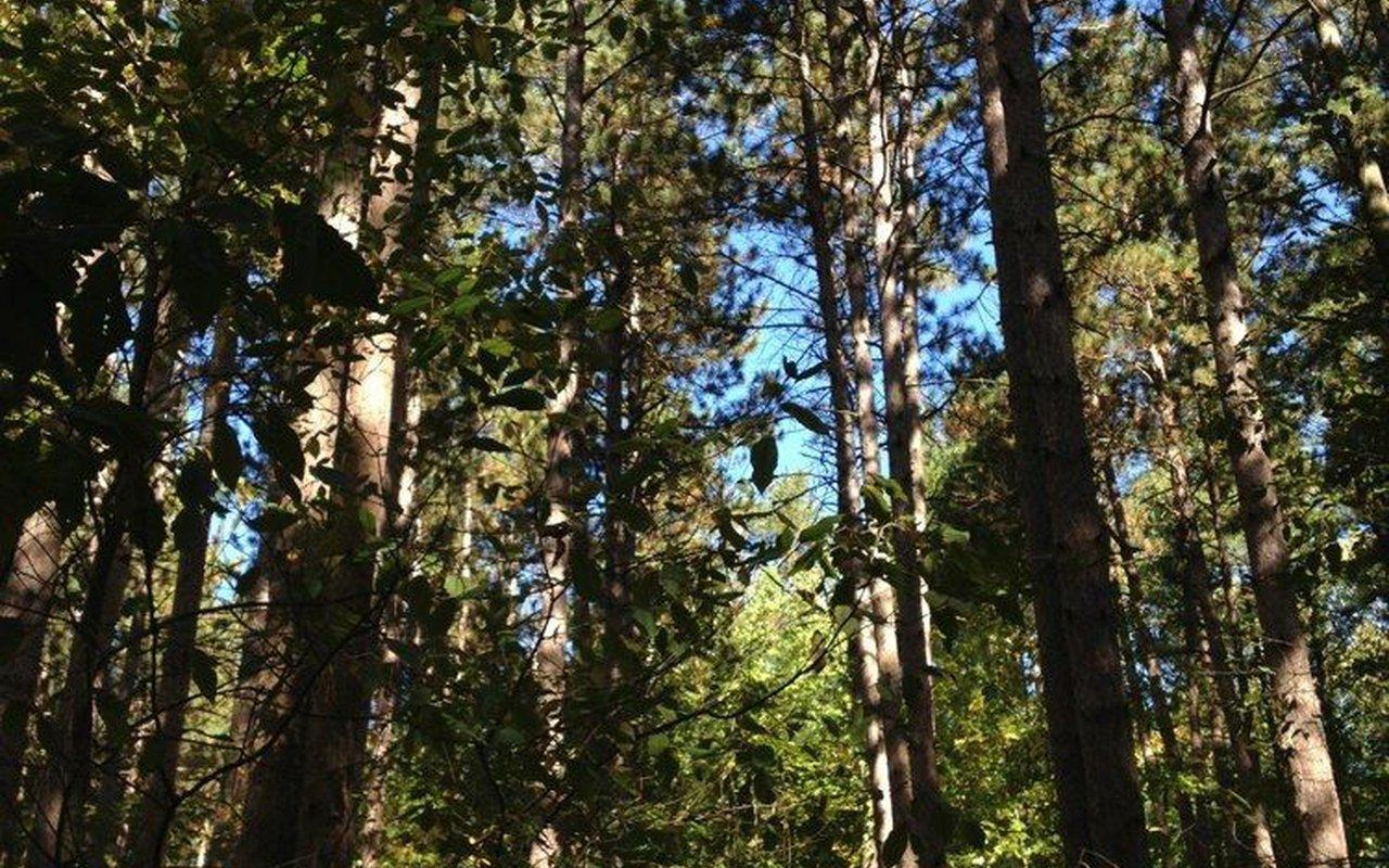 AWAYN IMAGE Aman Park Loop Trail