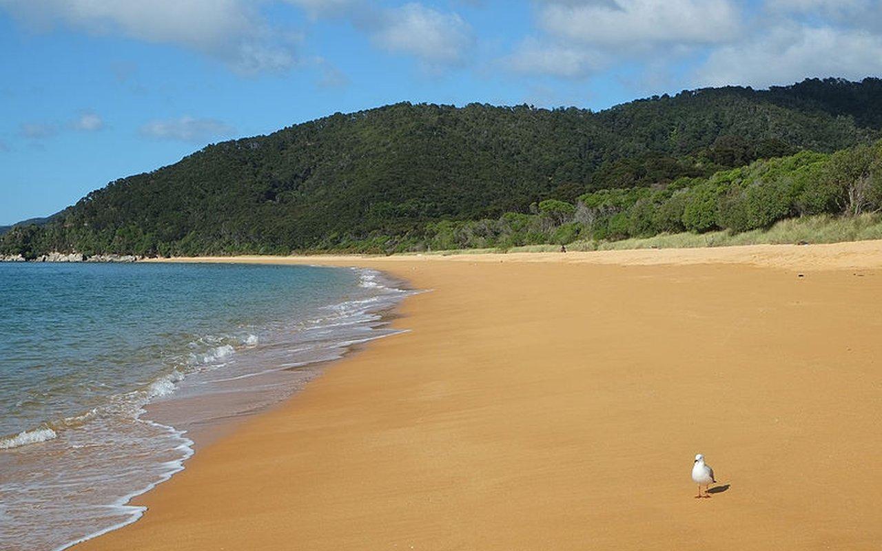 AWAYN IMAGE Totoranui Beach Camping