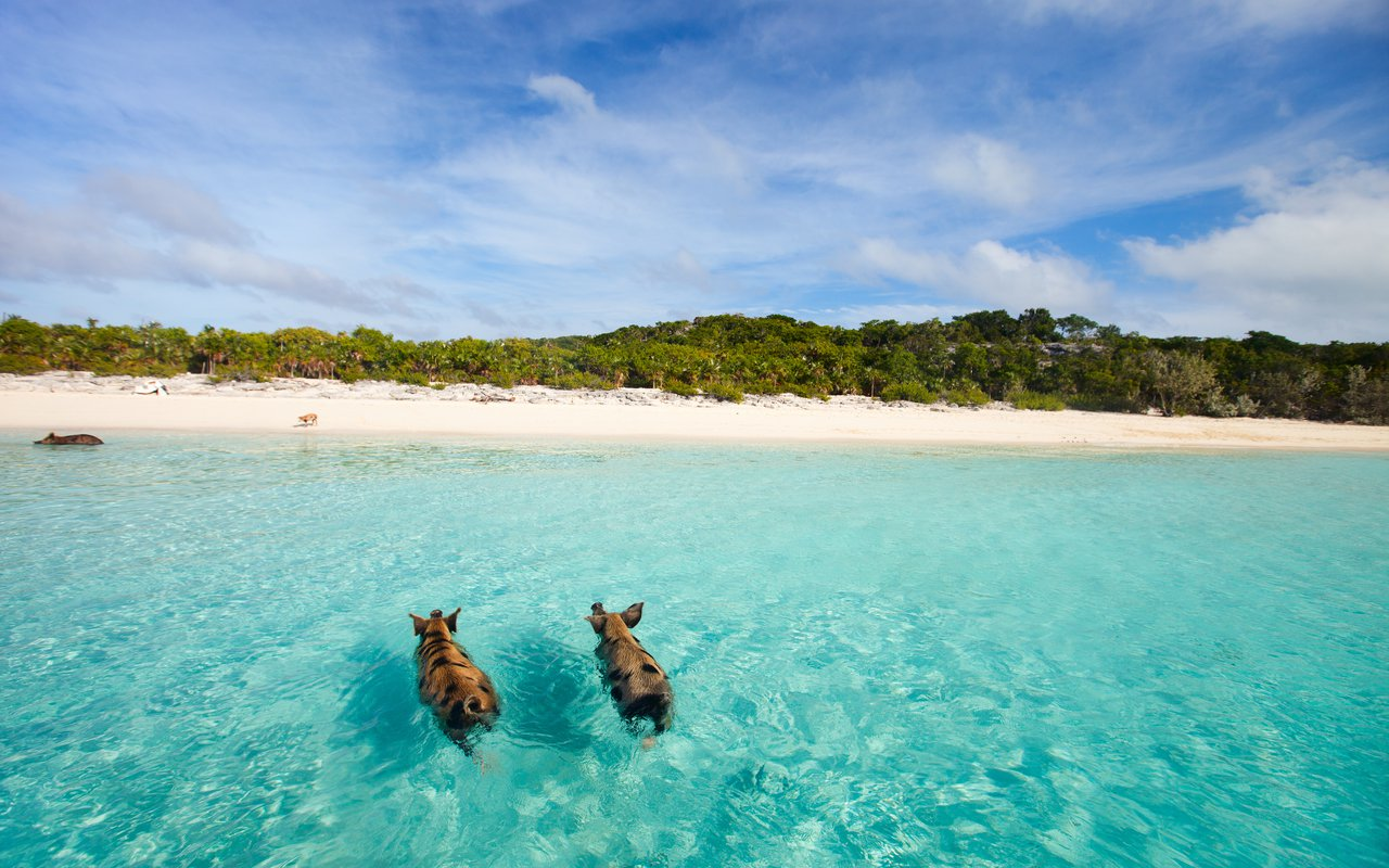 AWAYN IMAGE Swim with Pigs on the Big Majors Cay