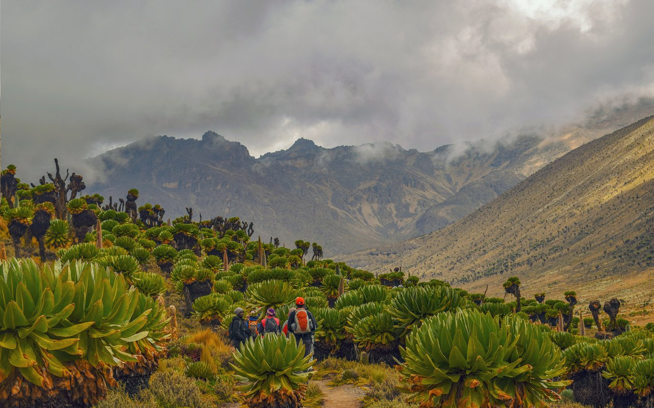 AWAYN IMAGE Hiking trip to Mount Kenya