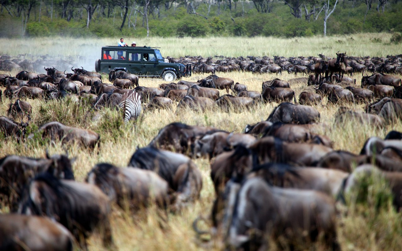 AWAYN IMAGE Photograph the Wildebeest Migration at the Maasai Mara