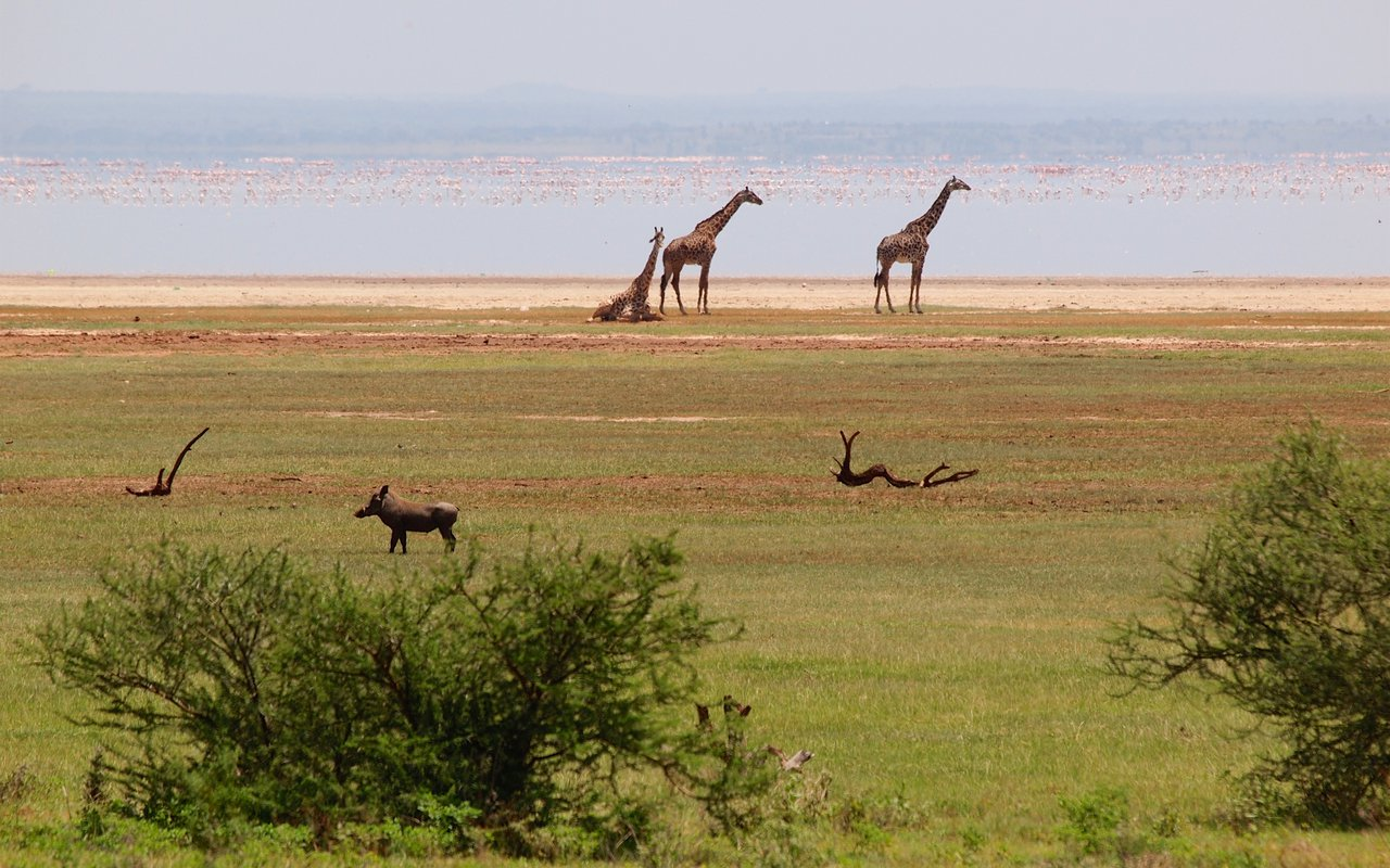 AWAYN IMAGE Discover the Wildlife in Lake Manyara National Park