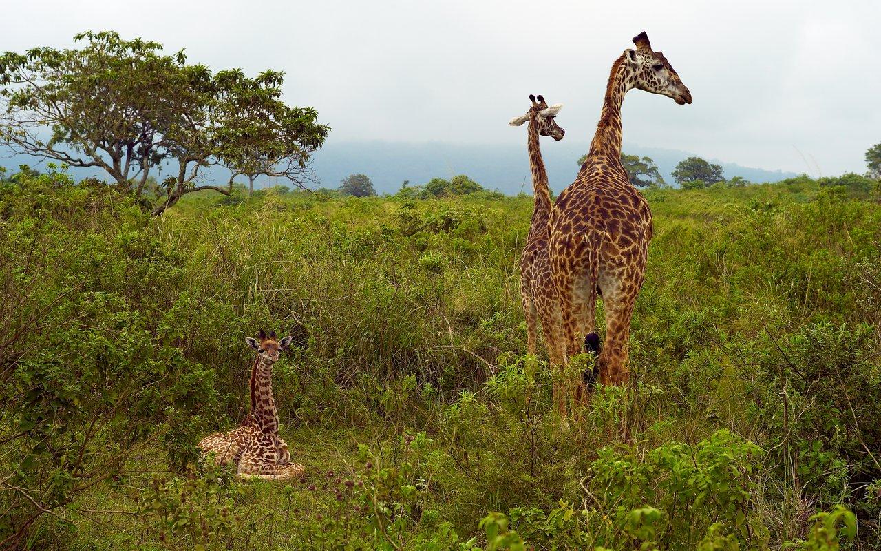 AWAYN IMAGE Discover Arusha National Park