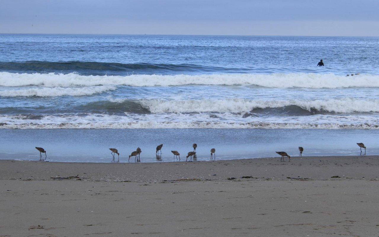 AWAYN IMAGE Zmudowski State Beach