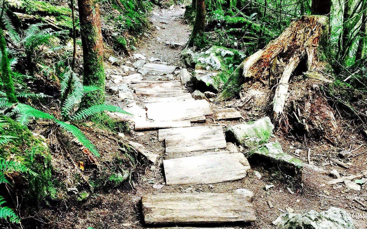 AWAYN IMAGE Lime Kiln Trail