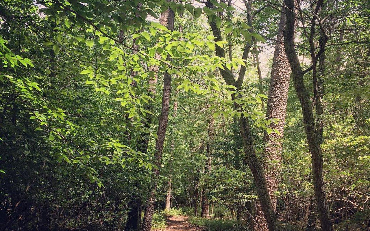 AWAYN IMAGE Greenbelt Park Loop