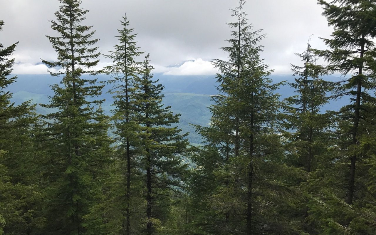 AWAYN IMAGE Mount Si Trail