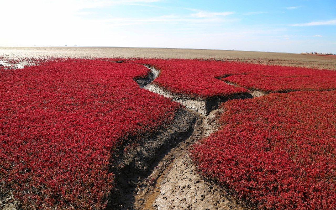 AWAYN IMAGE Visit the Red sea beach Panjin 红海滩
