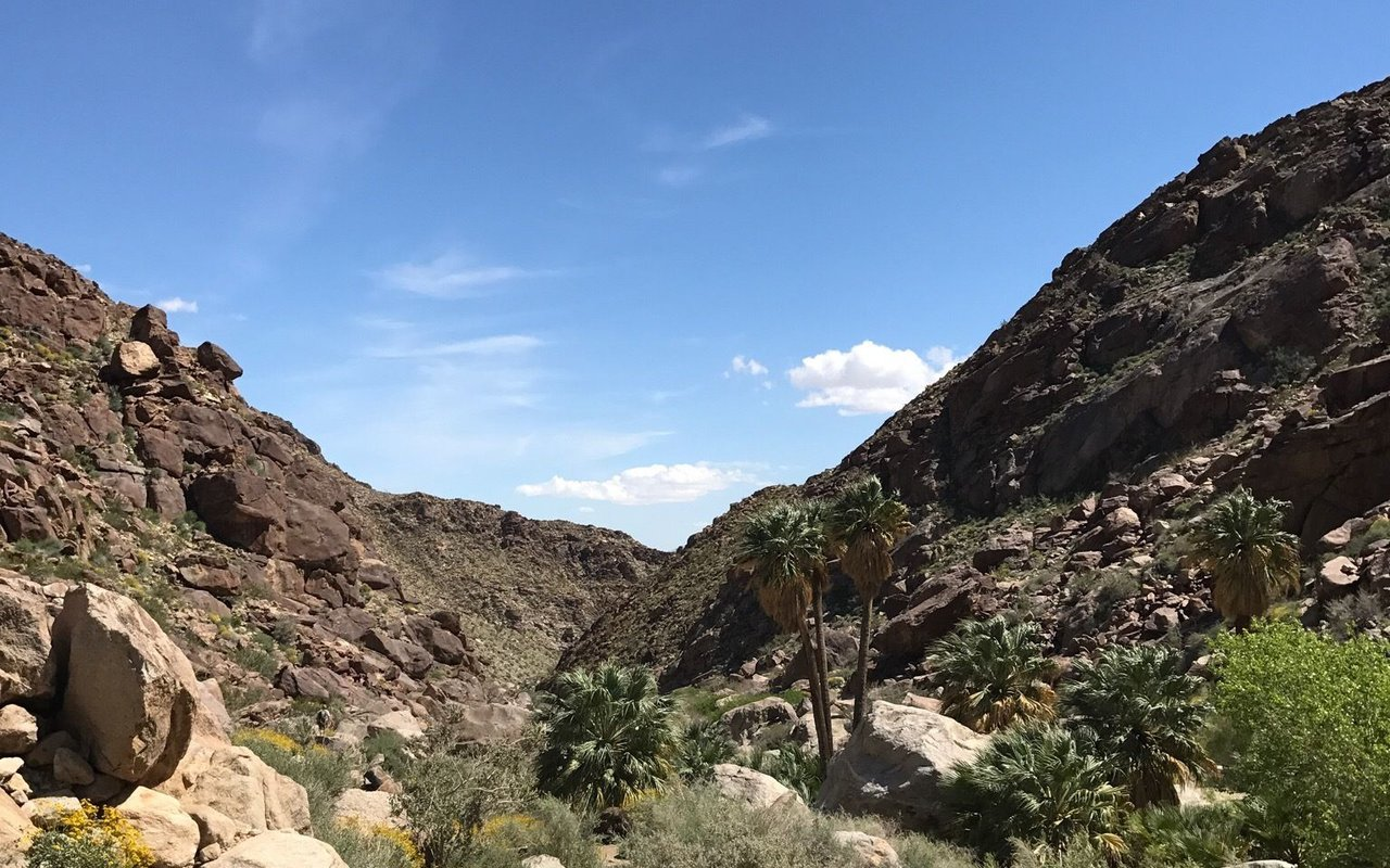 AWAYN IMAGE Hike to Borrego Palm Canyon