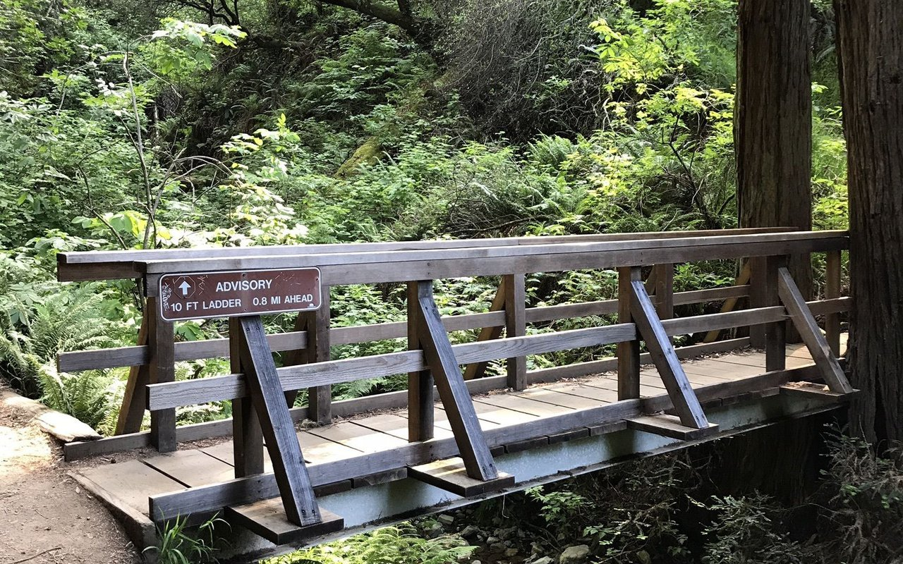 AWAYN IMAGE Dipsea Trail to Steep Ravine Trail Loop from Stinson