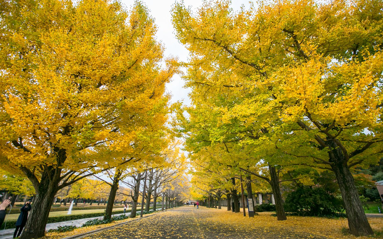 AWAYN IMAGE Walk in Showa Kinen Park
