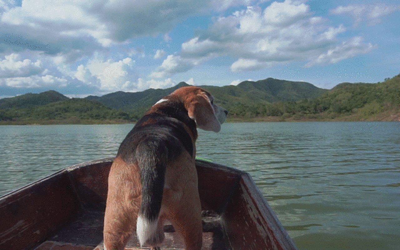 AWAYN IMAGE Ko Phi Phi Le Islands in Thialand