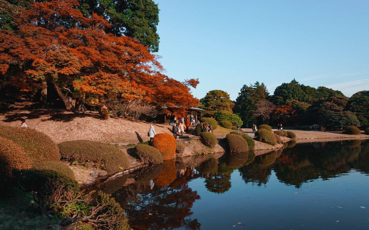 AWAYN IMAGE Autumn in Shinjuku Gyoen National Garden